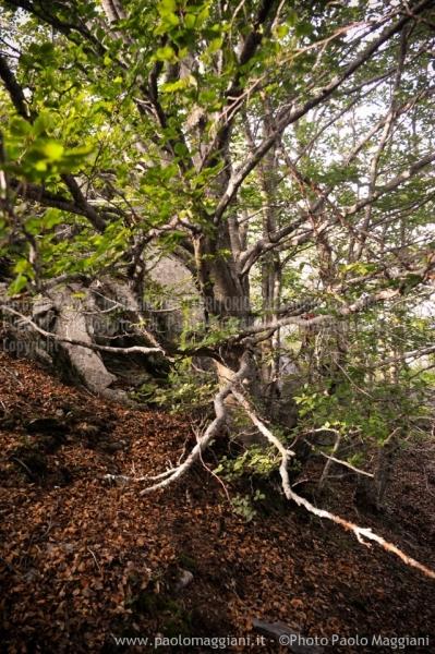 24-settembre-2011-dolmen-monte-freddone-alpi-apuane-apuanian-alps-enrico-calzolari-photo-paolo-maggiani_dsc4246jpg_25535952274_o