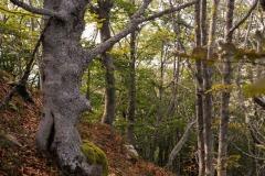 24-settembre-2011-dolmen-monte-freddone-alpi-apuane-apuanian-alps-enrico-calzolari-photo-paolo-maggiani_dsc4248jpg_26048254312_o