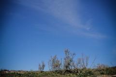 Una_Giornata_Etrusca_a_Populonia_154ND70019P_MAG9604-Ph_Paolo_Maggiani