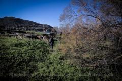 Una_Giornata_Etrusca_a_Populonia_154ND70019P_MAG9653-Ph_Paolo_Maggiani