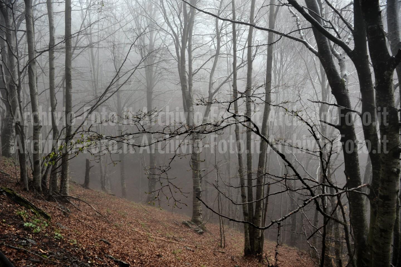 Wood-bosco-foresta-trees-alberi_DSC8180_Paolo_Maggiani