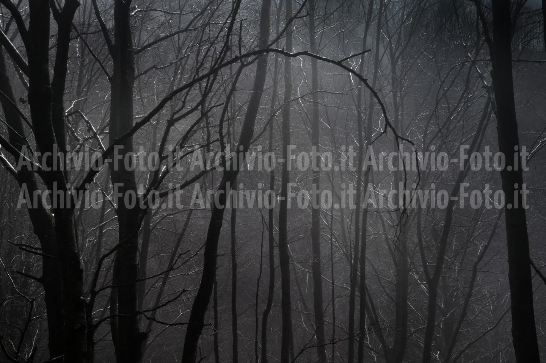 Wood-bosco-foresta-trees-alberi_DSC8191_Paolo_Maggiani