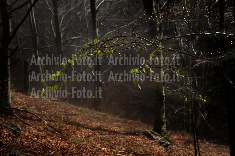 Wood-bosco-foresta-trees-alberi_DSC8194_Paolo_Maggiani