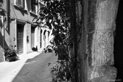 Carrara_Via-Santa-Maria_scorci-cittadini_2010_maggianipaolo_51_25147375521_o