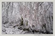 neve-alberi-foglie-Paolo-Maggiani-Photos-144