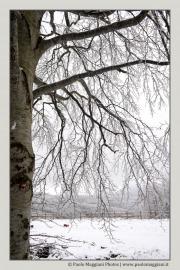 neve-alberi-foglie-Paolo-Maggiani-Photos-D61018P_MAG7873