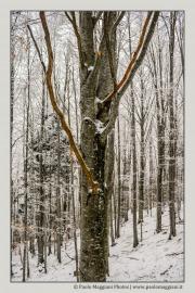 neve-alberi-foglie-Paolo-Maggiani-Photos-D61018P_MAG7884