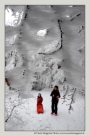 neve-alberi-foglie-Paolo-Maggiani-Photos-D61018P_MAG7903